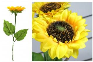 Słonecznik pojedynczy kwiat