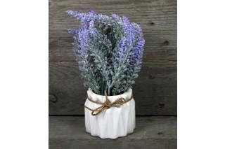 Kwiat w doniczce - lawenda